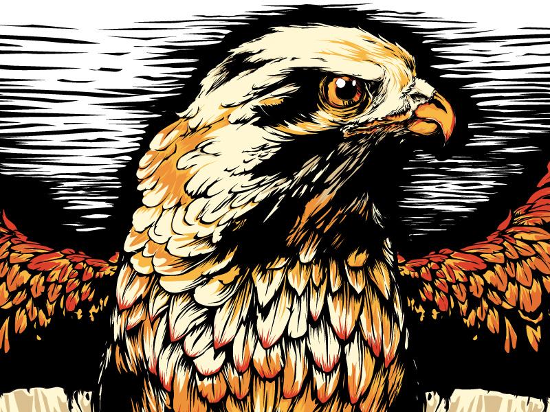 jpg transparent download Vector concepts hawk. Logo concept by michael