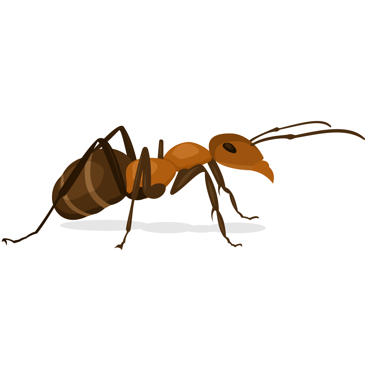 image Vector defintion arthropod. Ant insect x faktor