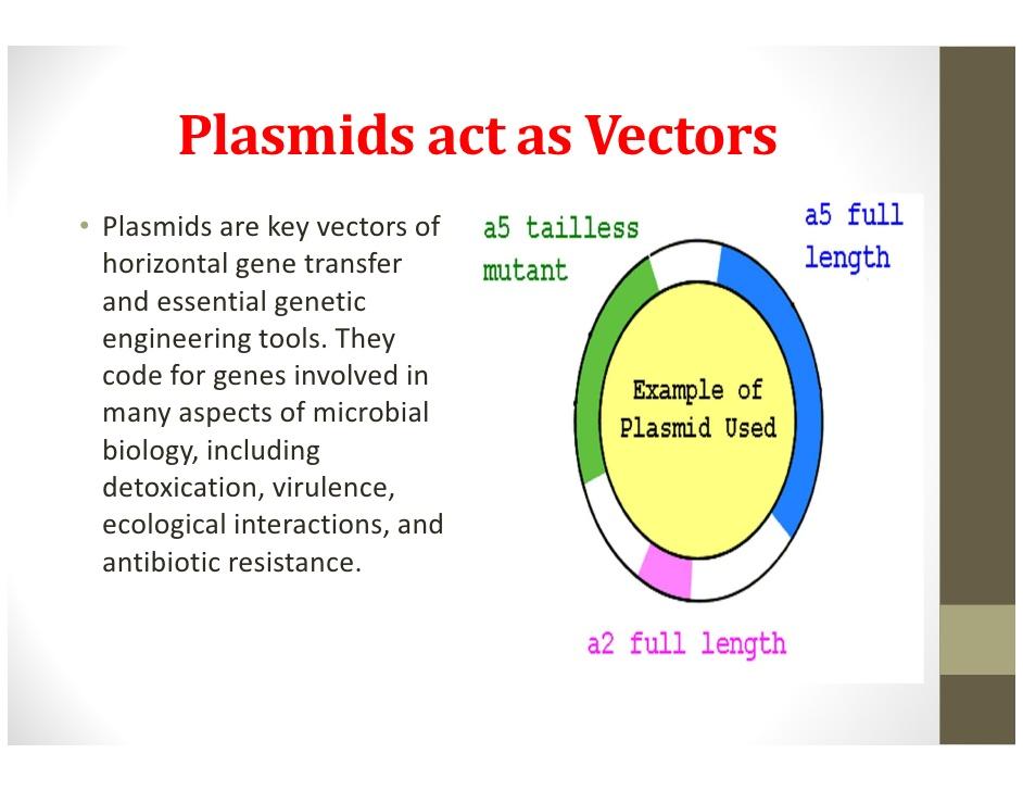 vector freeuse Vector defintion biology. Plasmids