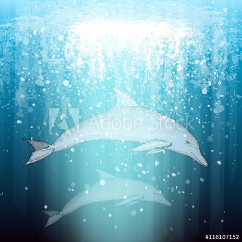 png transparent Vector dolphin beautiful. Two swim underwater buy
