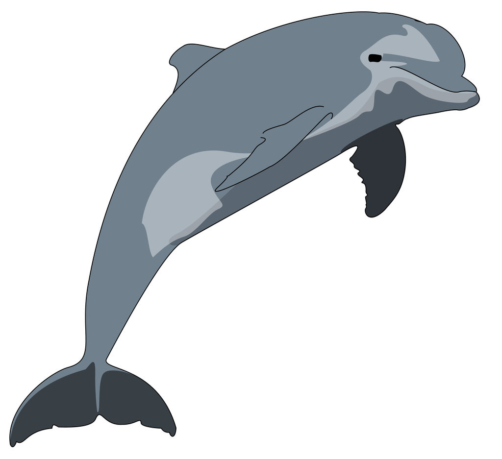 transparent download Clip art png download. Vector dolphin bottlenose
