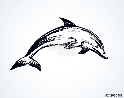 graphic transparent download Stock image and royalty. Vector dolphin drawing