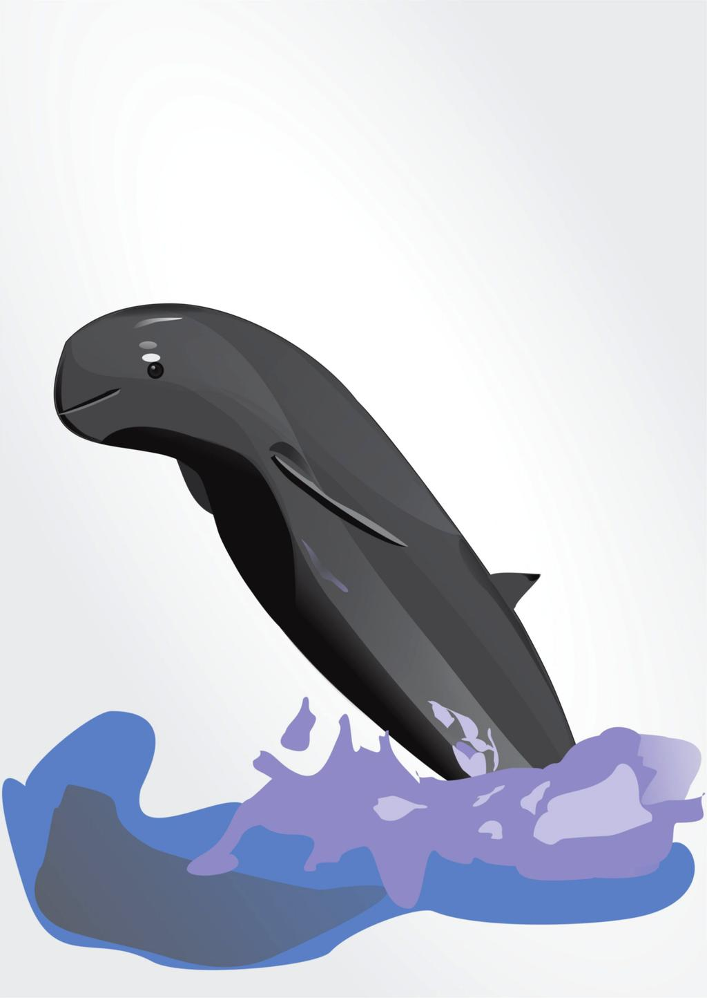 clip art transparent library Vector dolphin pesut. Mahakam indonesia by dindadinho