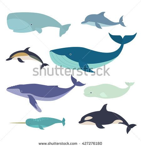 clipart freeuse Set of whales and. Vector dolphin whale