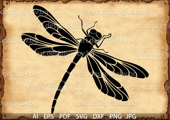 clip library stock Vector DRAGONFLY