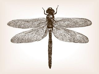 clipart black and white Dragonfly insect hand drawn sketch vector