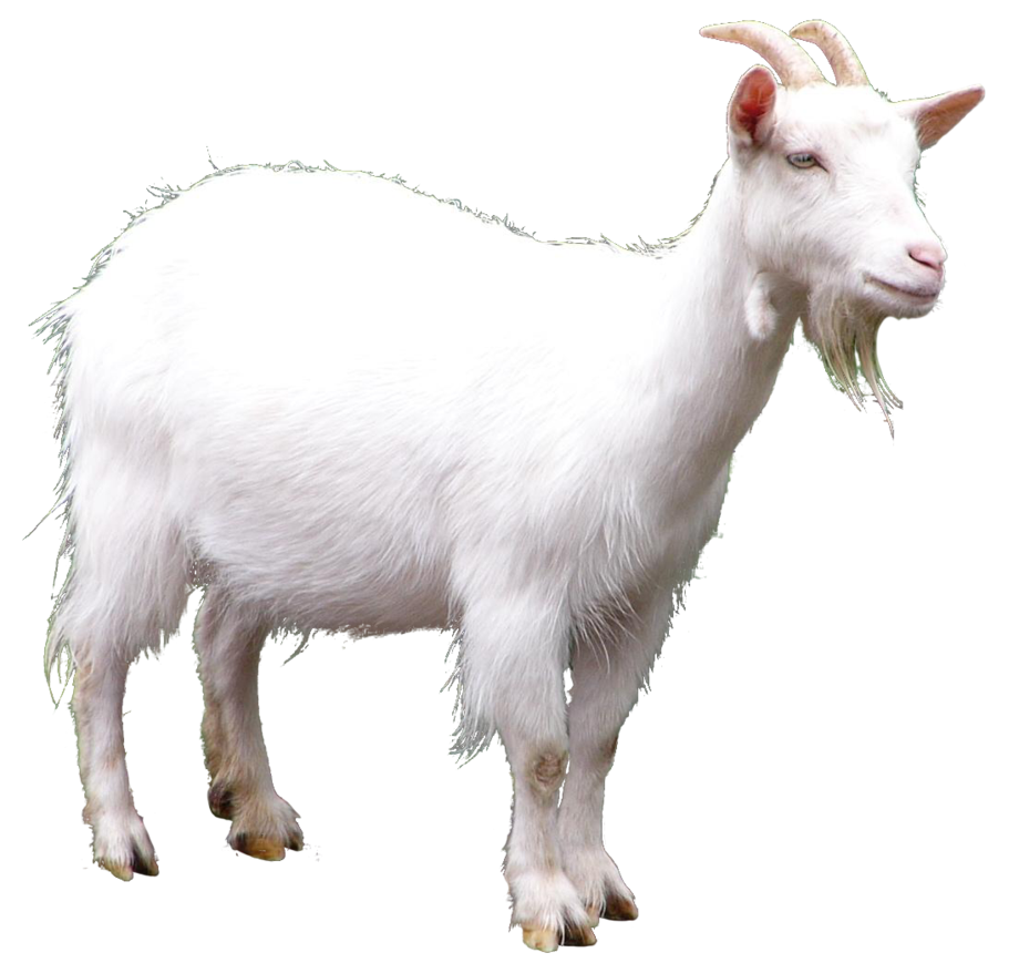 png free stock Collection of free transparent. Vector emojis goat