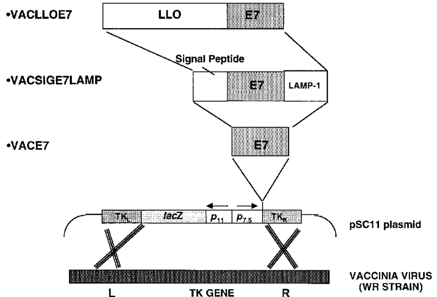 png transparent stock Schematic of the different. Vector forms