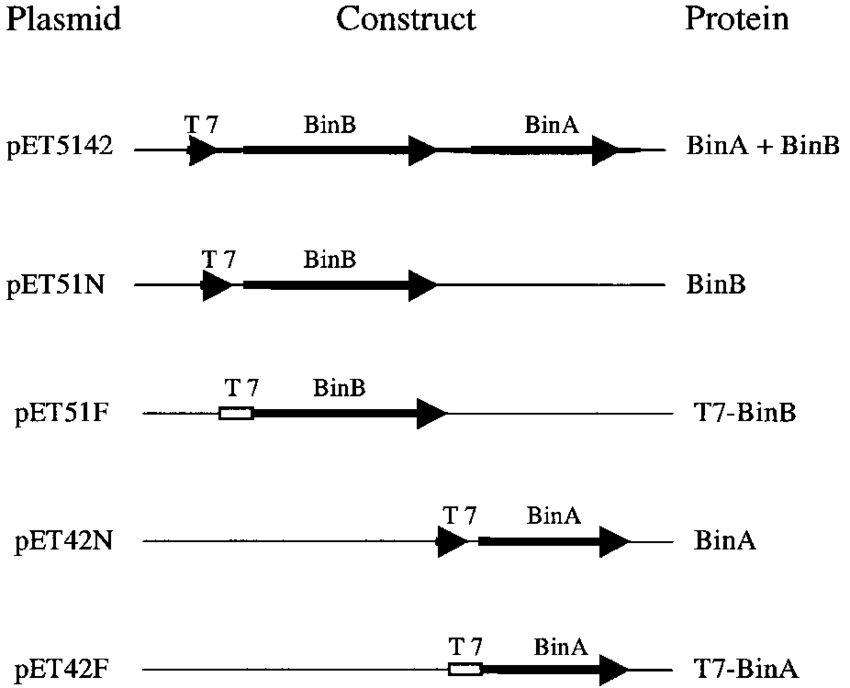 svg black and white download Schematic diagrams showing construction of recombinant plasmids to