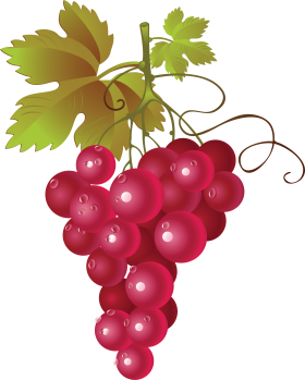 svg royalty free library Grape PNG image