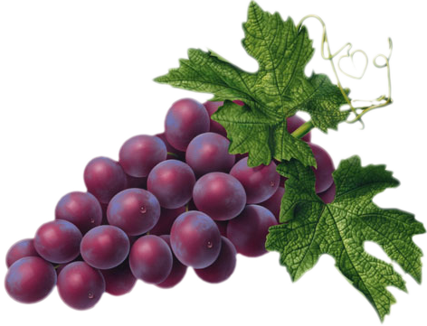 png free stock Red Grape PNG Picture