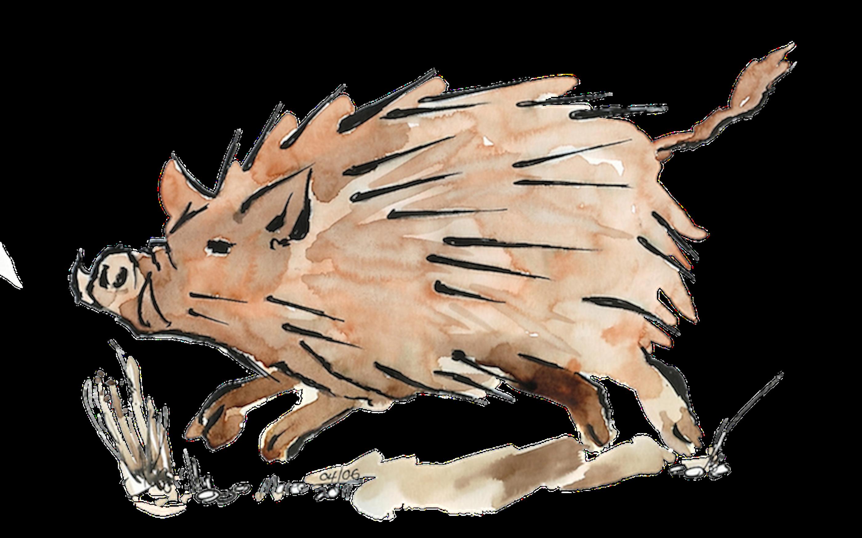 clipart freeuse Warthog sketch in Moleskine Folio