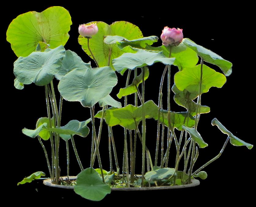 transparent download vector landscaping garden plant #108040409