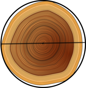 image freeuse download Circumference Of A Tree Clip Art at Clker