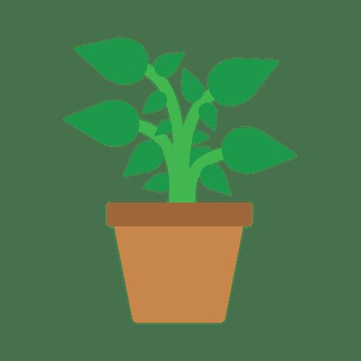 image freeuse Flat flower plant tub