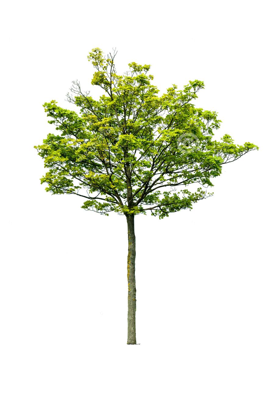 graphic free cutout tree