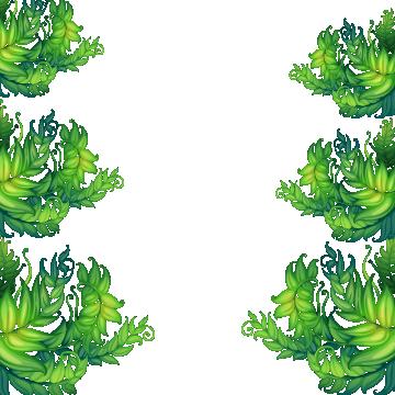 transparent Tropical Frame PNG Images
