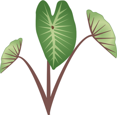 picture free Taro Plant Drawing at GetDrawings