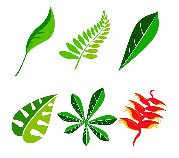 clip art transparent download Vector cartoons leaf. Jungle graphics free vectors