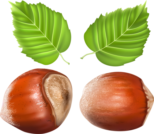 clip royalty free Vegetables fruits herbs and nuts realistic vector