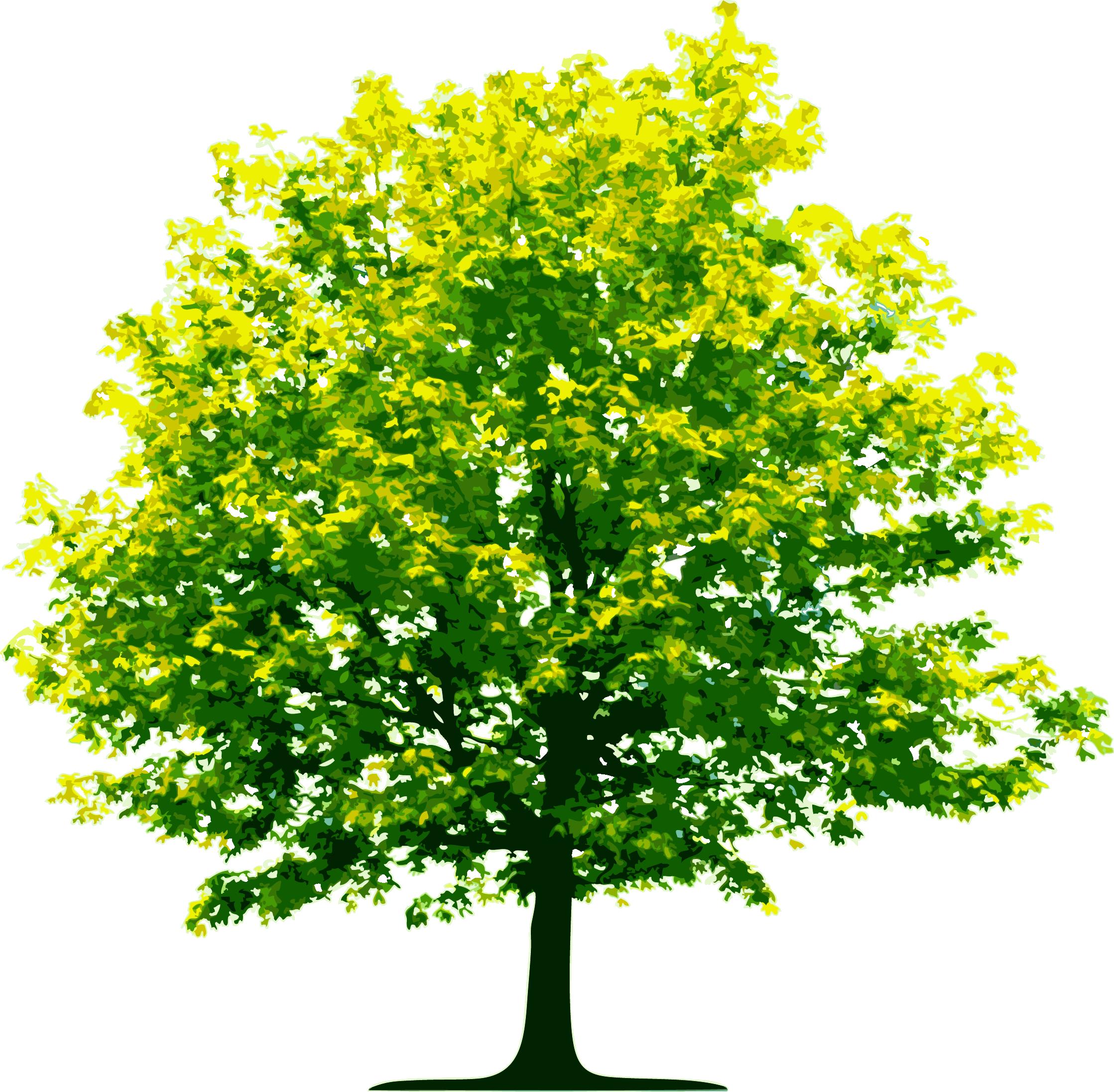 png transparent stock Aamu tree planting wednesday. Vector bushes hutan