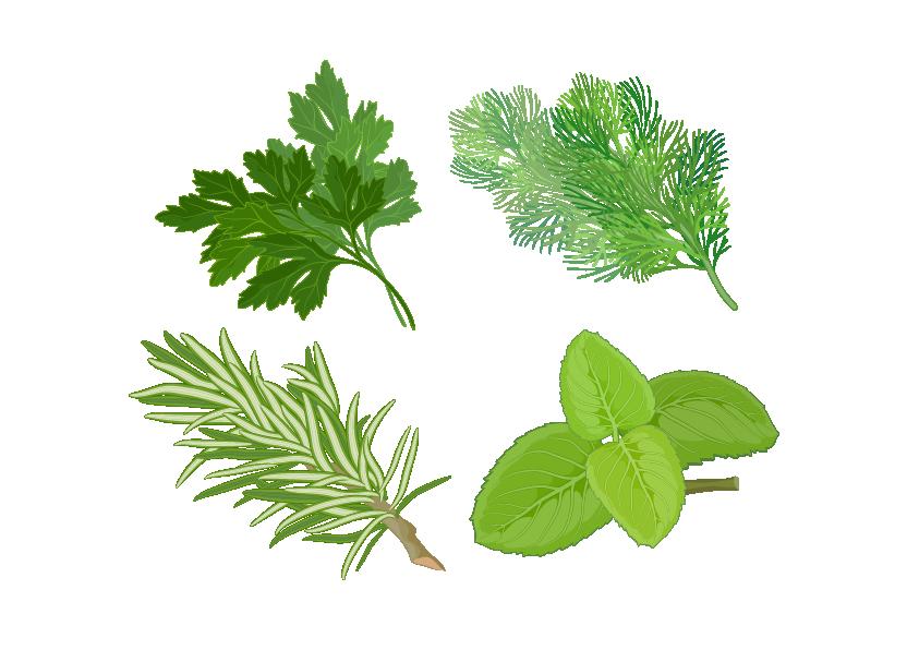 banner library download Herb Basil Spice Medicinal plants Clip art