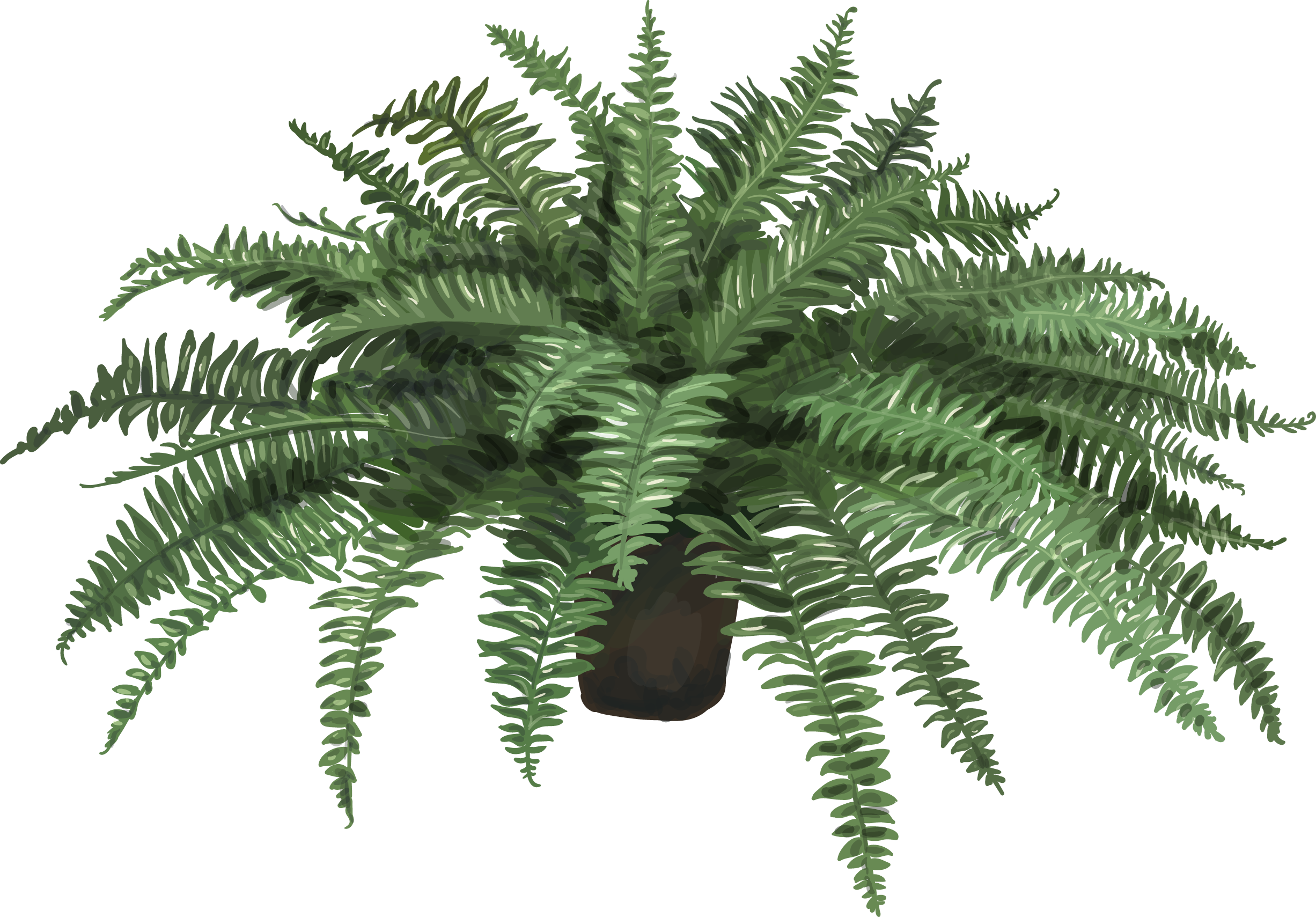 free library Nephrolepis exaltata Fern Plant Leaf Artificial flower