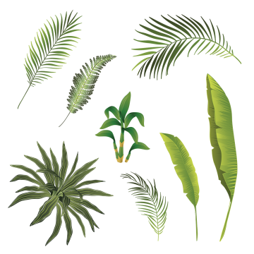banner freeuse stock Tropical Leaves PNG Images