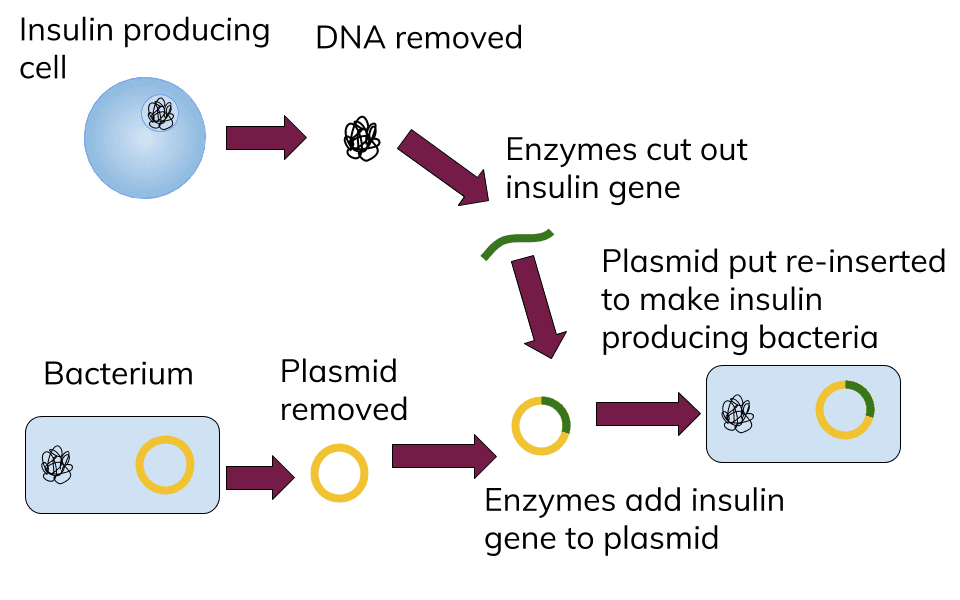 graphic free download Collection of free Vector dna genetic engineering