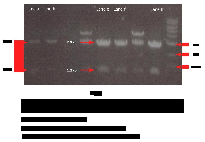 clipart transparent download vector plasmid pbluescript #118353116