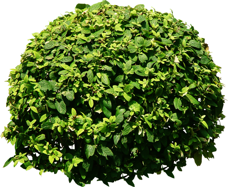 graphic transparent stock Vector bushes shrubbery.  shrub for free