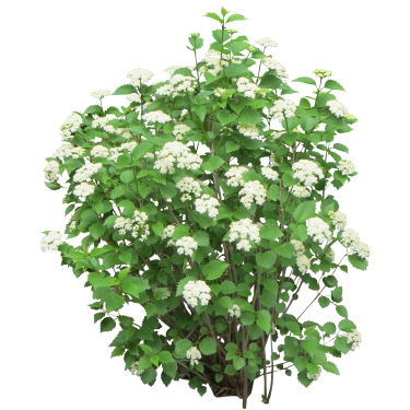 clip art free Bush with white flowers. Vector bushes background