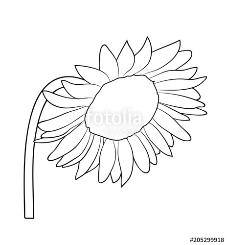 clipart library stock Illustration isolated in black. Vector sunflower hand painted
