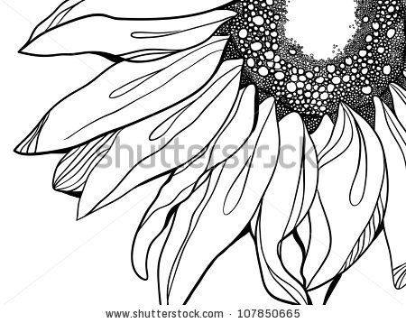 banner transparent library Vector sunflower line art. Images illustrations and cliparts