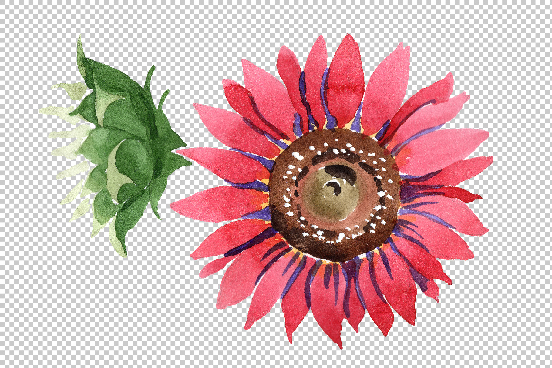 vector free stock Red flower watercolor png. Vector sunflower pink.