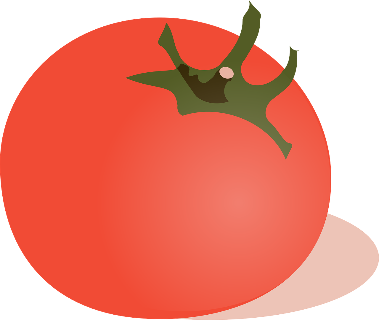 banner library Vector tomato. Vegetable red fresh free