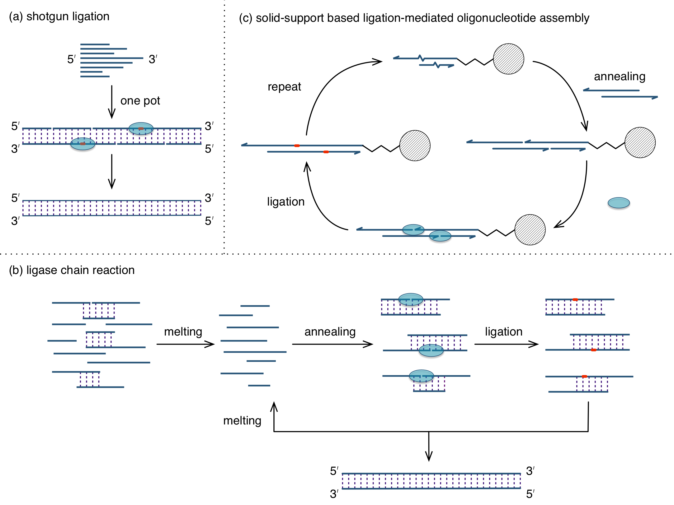 graphic black and white library Vector transformations ligation. Gene synthesis three methods
