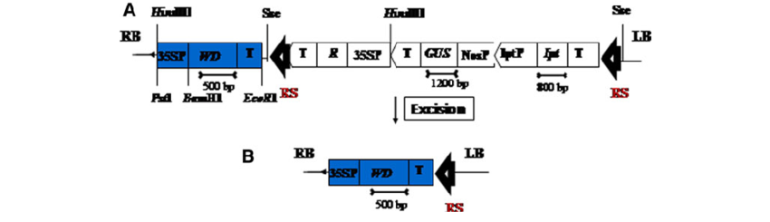 banner transparent library Schematic representation of the. Vector transformations t dna
