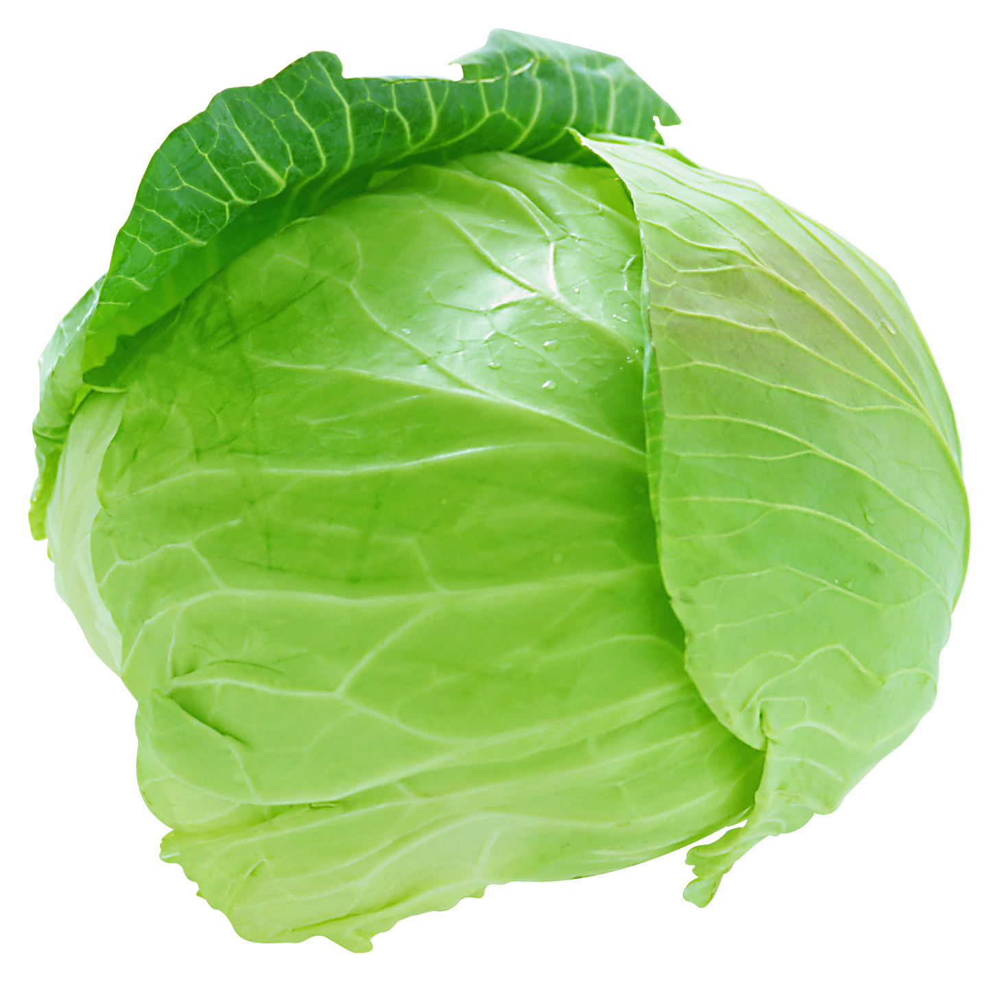 clipart Fresh png picture gallery. Cabbage clipart iceberg lettuce.