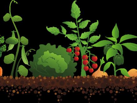 vector royalty free library Vegetable Garden Clipart