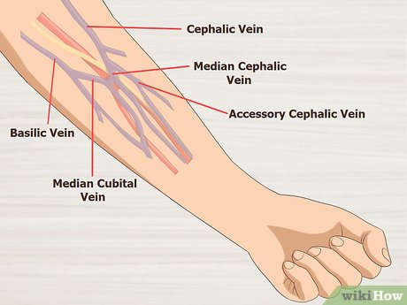 banner library library How to Draw Blood from Hard to Hit Veins
