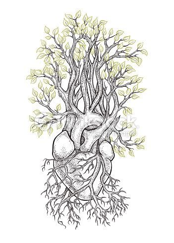 picture black and white library Human anatomical heart with. Veins drawing tree