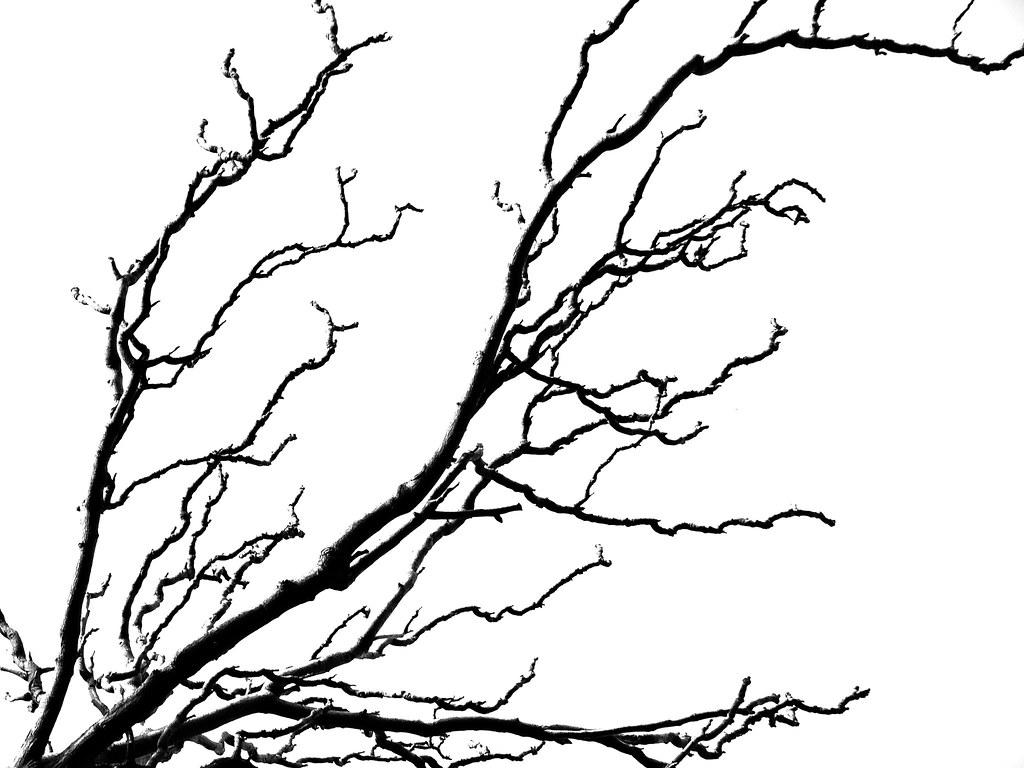vector library library Veins drawing tree. In nature through the