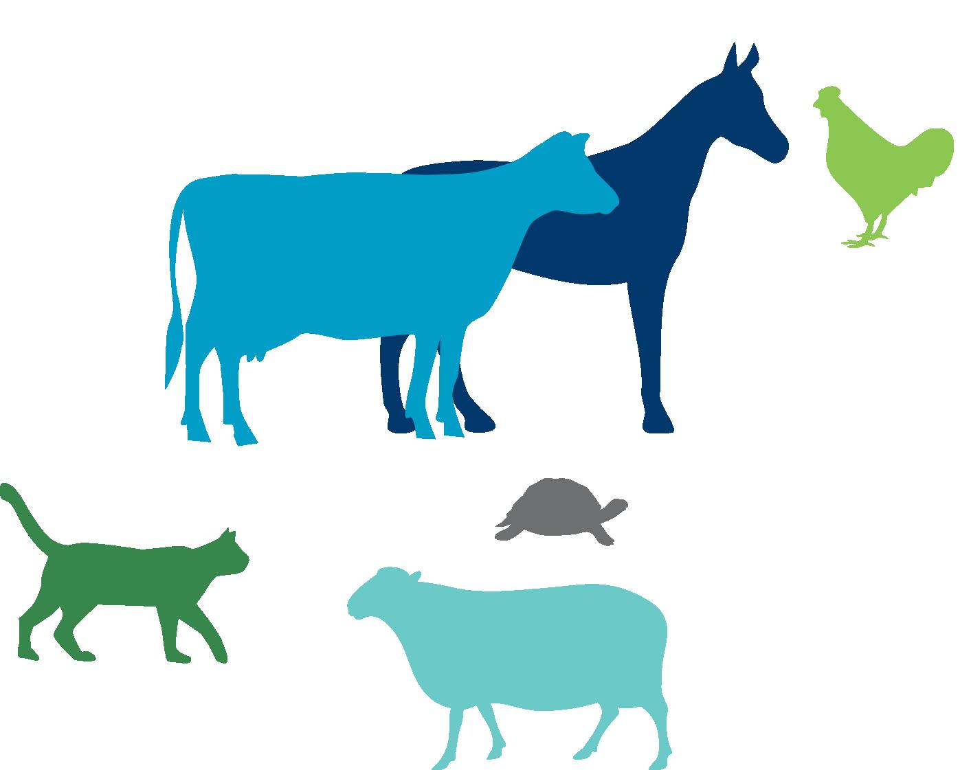 graphic royalty free Frontiers in veterinary science. Veterinarian clipart zoo veterinarian