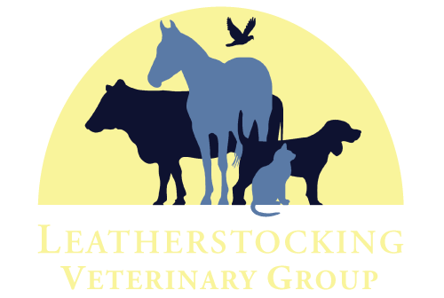 picture library Veterinarian clipart zoo veterinarian. Leatherstocking vet group teamwork
