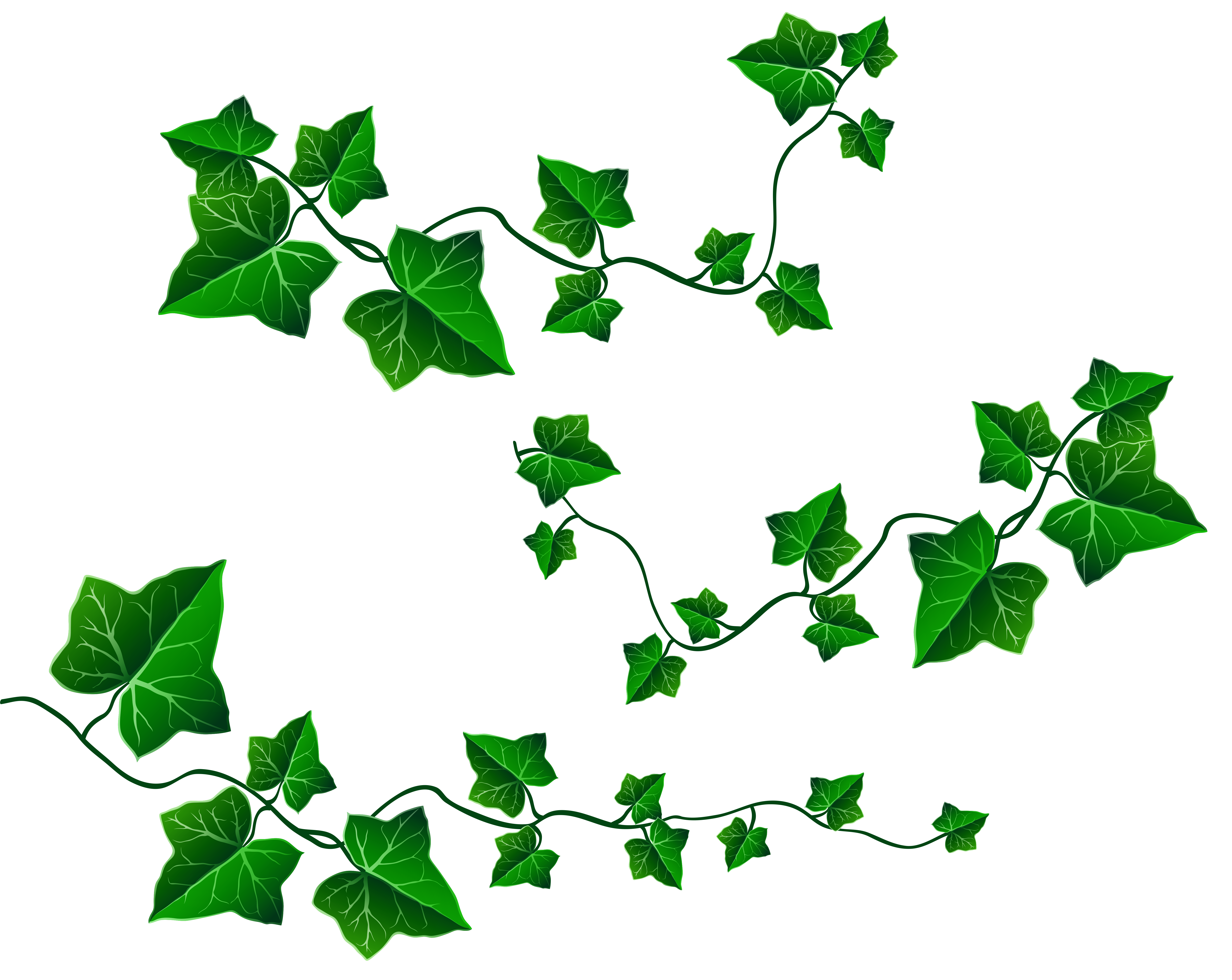 image black and white stock Leaves decoration png picture. Vine clipart