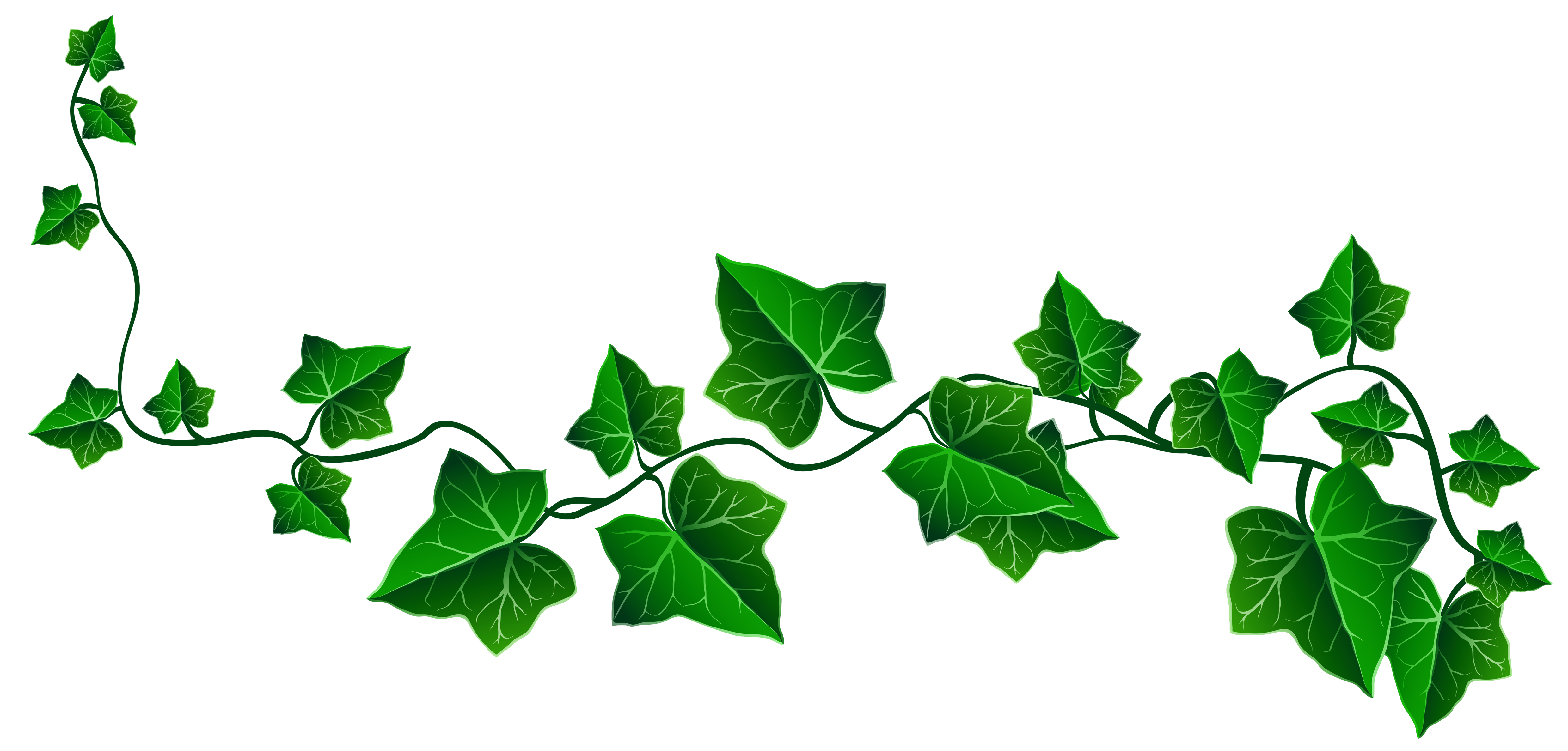 clip free stock Ivy drawing clip art. Vine clipart