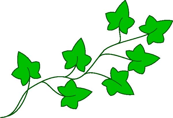image transparent stock Oak . Vine clipart