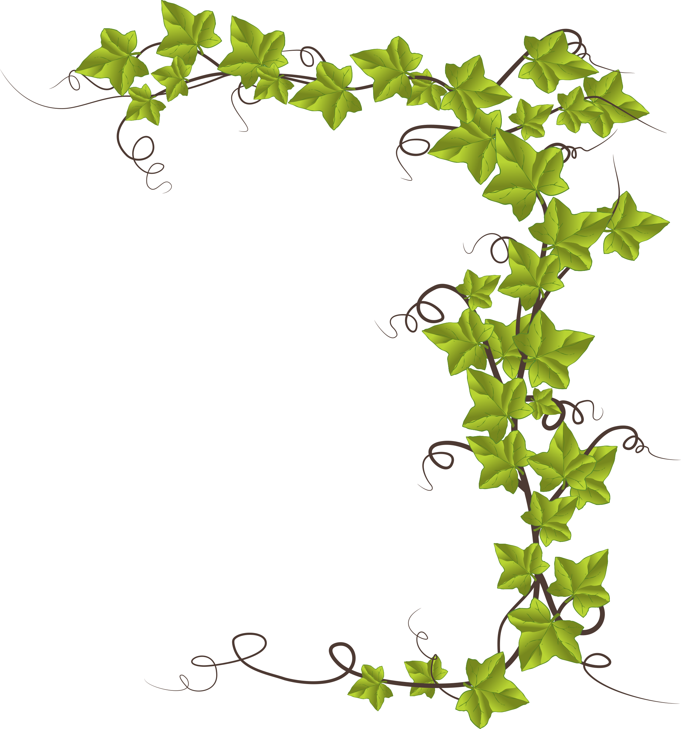 picture library stock Ivy wreath clipart. By conte magnus hedera