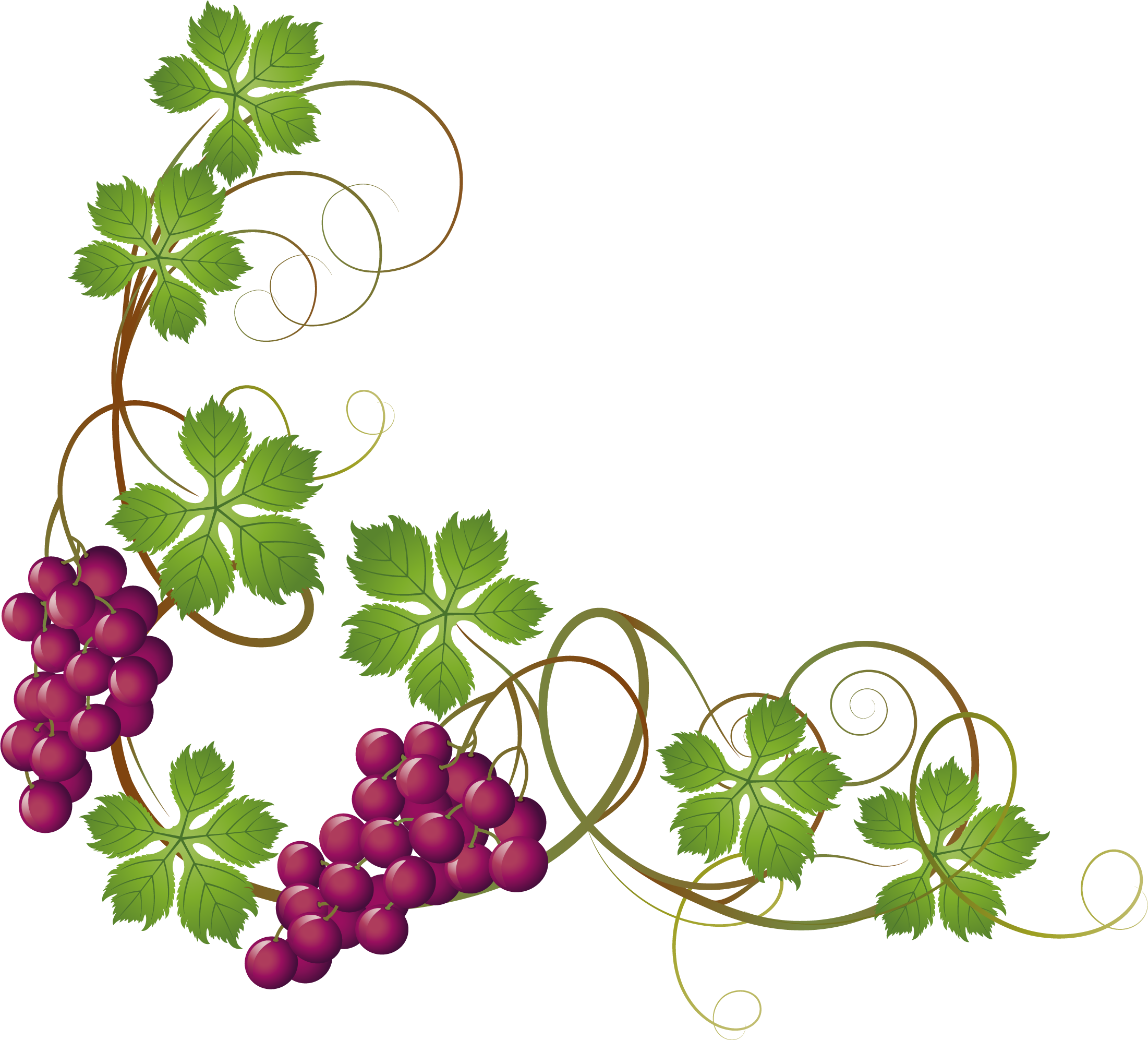 vector free library Common Grape Vine Grape leaves Clip art